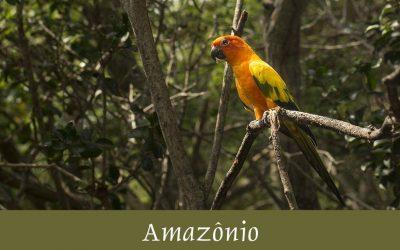 Amazônio