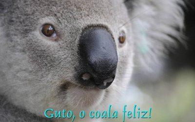 Guto, o coala feliz!
